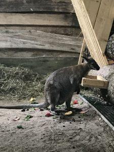 Freizeitland Geiselwind - Känguru
